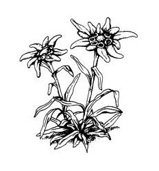 Edelweiss Stempel