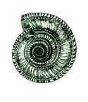Stempel Muschel
