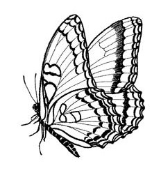 Schmetterling Stempel
