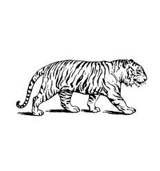 Tiger Stempel