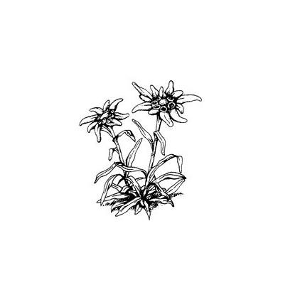 Edelweiss Stempel 286g