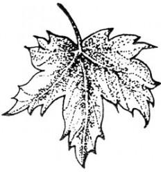 Ahornblatt Stempel