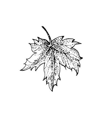 Ahornblatt Holz Stempel