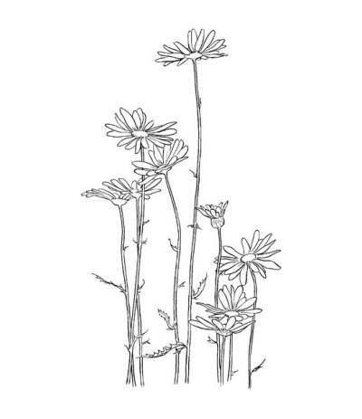 Gänseblumen Stempel
