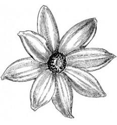 Vintage Blume