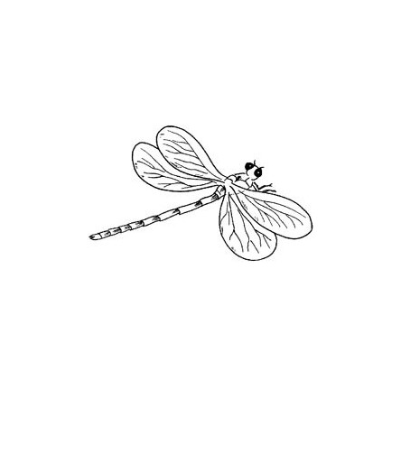 Libelle Stempel
