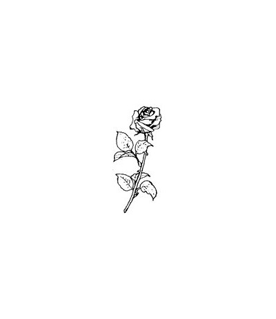 Rose Stempel