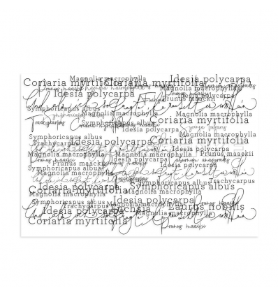 Clear Stamp Gemischte Typo - Alexandra Renke