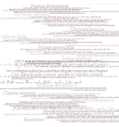 Scrapbooking Papier Blumennamen violett - Alexandra Renke