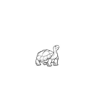 Schildkröte Stempel