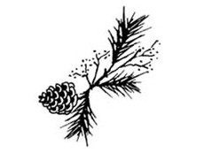 Sapins de Nöel, Couronnes, Guirlandes