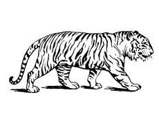 Wild Animals Rubber Stamps